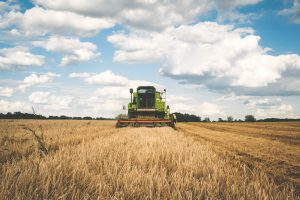 Traktor skördar